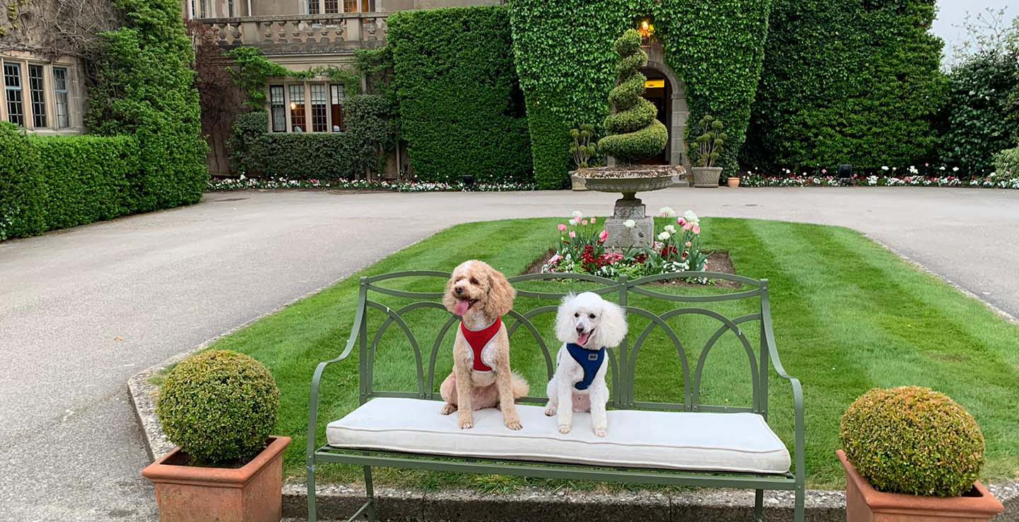 dog friendly hotel in warwickshire